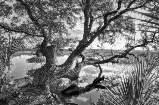 Reflections Under the Twisted Oak by Ginny Horton