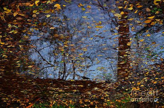 Reflexii 1 by Bajan Sorin