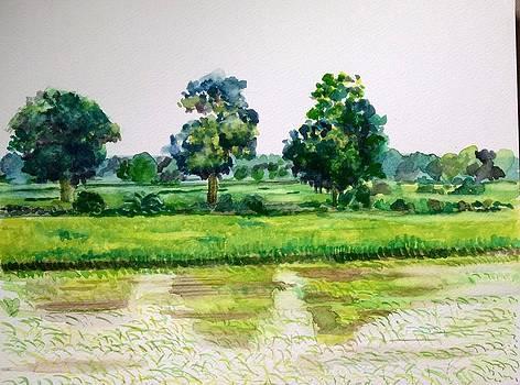 Aditi Bhatt - Refreshed