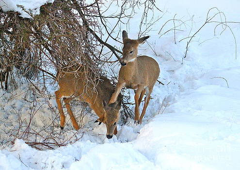 Reindeer Games by Jay Nodianos