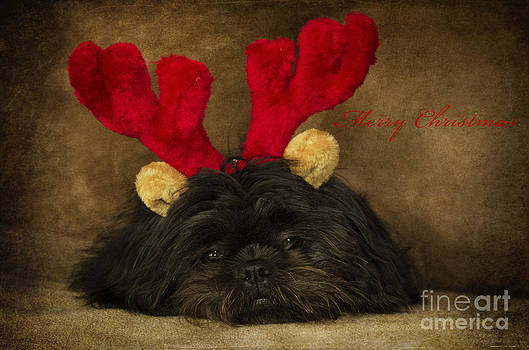 Reindeer I  by Nicole Markmann Nelson