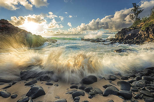 Rejuvenation by Hawaii  Fine Art Photography