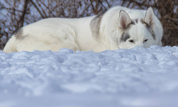 Relaxing In the Snow by Jonathan Grim