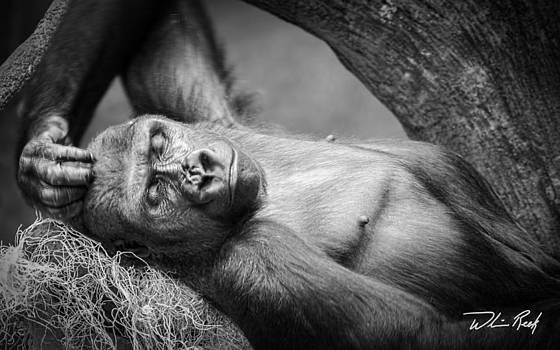 REM Sleep by William Reek