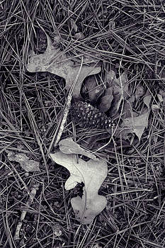 Nina Fosdick - Remains of the Day