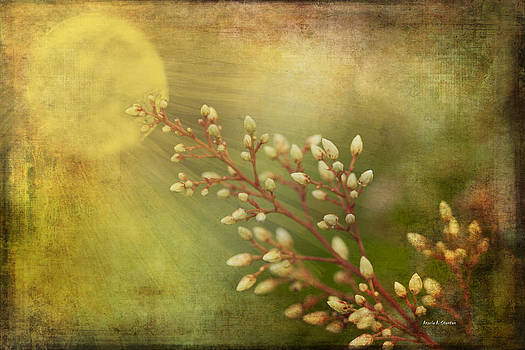 Remember Spring and Summer by Angela Stanton