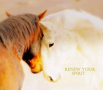 Renew Your Spirit  by Jeanne  Bencich-Nations