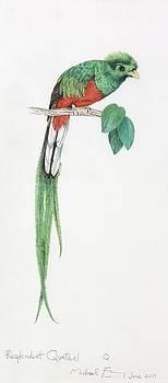 Michael Earney - Resplendent Quetzal