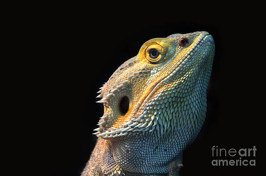 Reptile by Andres LaBrada
