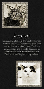 Andee Design - Rescued