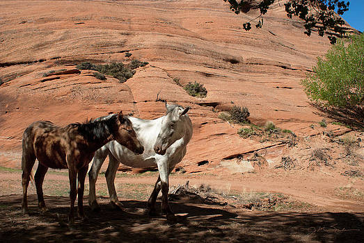 Julie Magers Soulen - Reservation Horses In Canyon de Chelly