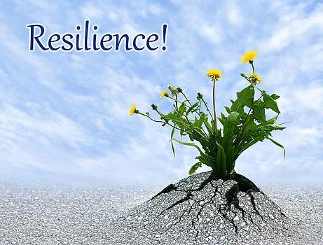 Dreamland Media - Resilience