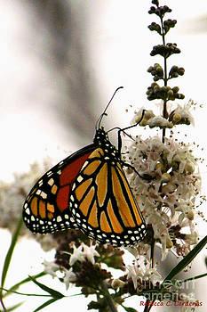 Resting Butterfly by Rebecca Christine Cardenas