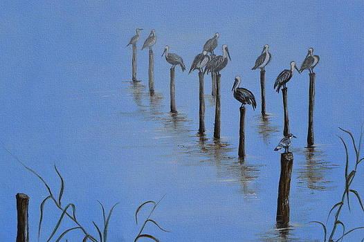 Resting Pelicans by Jorge Parellada