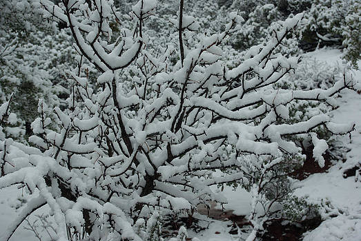 Resting Snow by Curtis Jones