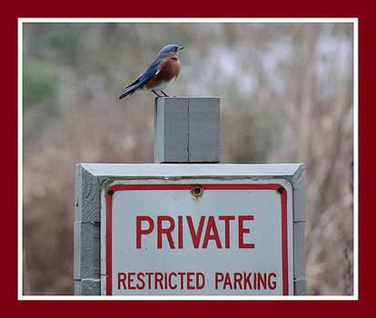 Rosanne Jordan - Restricted Parking