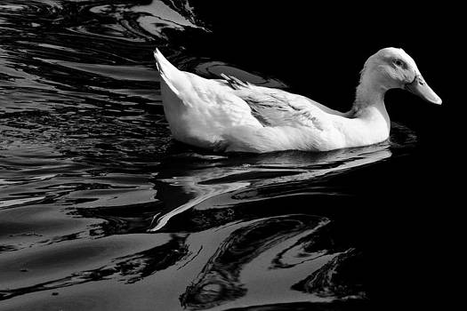 Retro Duck by Jeff  Jacobson