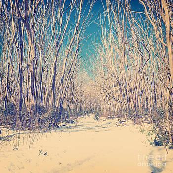 Tim Hester - Retro Snow Trees