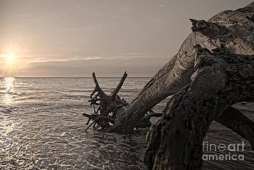 Returning to the Sea by Glenda Wright