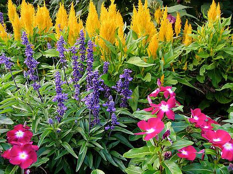 Reynolda Flower Garden 1 by Deborah Willard
