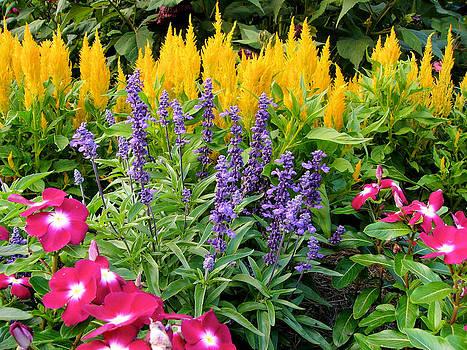 Reynolda Flower Garden 4 by Deborah Willard