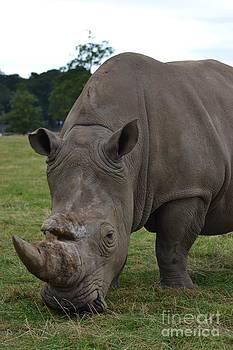 Rhino 2 by Stephanie Guinn