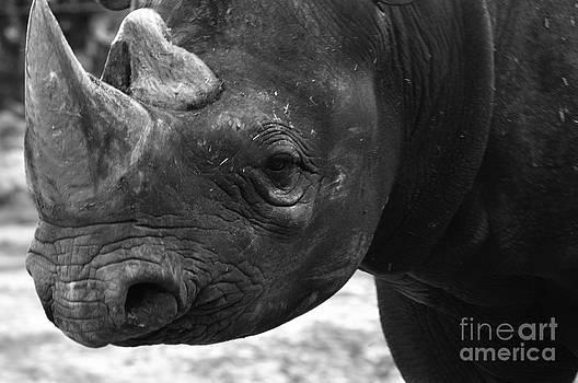 Rhino by Andres LaBrada