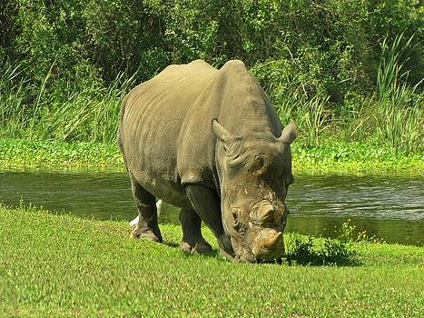 MTBobbins Photography - Rhino by the Pond