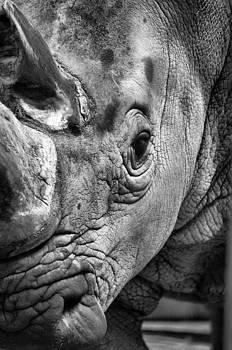 Emily Stauring - Rhino