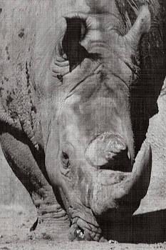 Rhino in Gray by Sarah Boyd