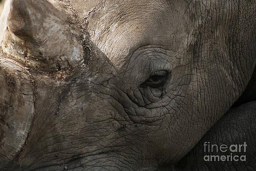 Rhino by Lynn Jackson