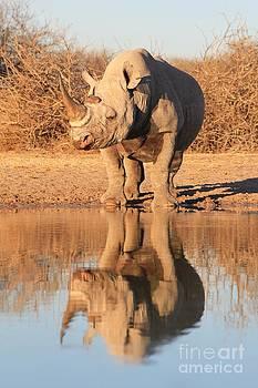 Hermanus A Alberts - Rhino Mirror