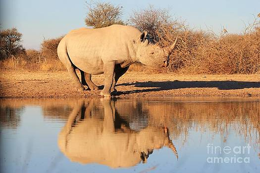 Hermanus A Alberts - Rhino Reflection