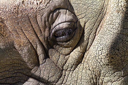 Wingsdomain Art and Photography - Rhinoceros 7D9116