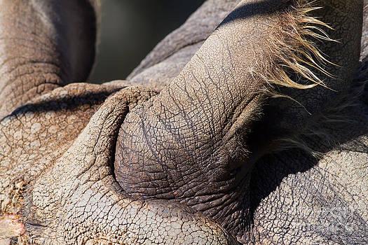 Wingsdomain Art and Photography - Rhinoceros 7D9121