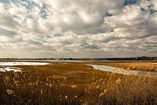 Rhode Island Marshes 1 by Nancy De Flon