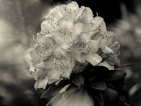 Rosanne Jordan - Rhododendron Bouquet