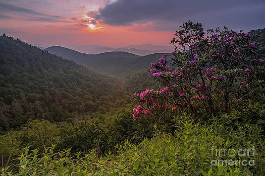 Rhododendron on the Blue Ridge Parkway. by Itai Minovitz