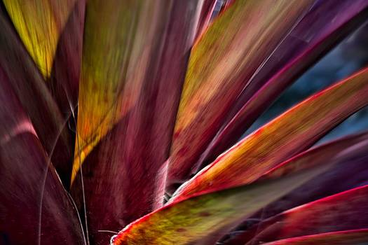 Rhoeo plant by Esther Branderhorst