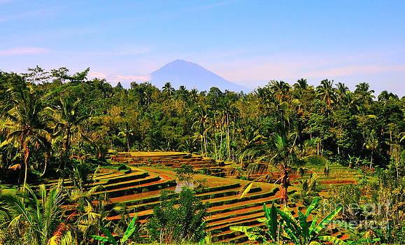 Rice field by Wayan Suantara
