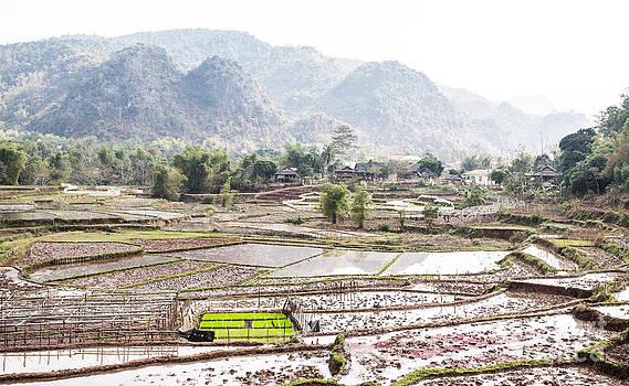 Rice Fields and Village in Vietnam by Paul Frederiksen