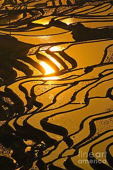 Rice Terraces Of Yuanyang by Konstantin Kalishko