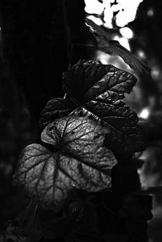 Rich Leaves by Ian Wilson