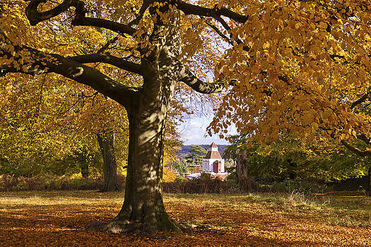 Richmond Autumn by Maj Seda