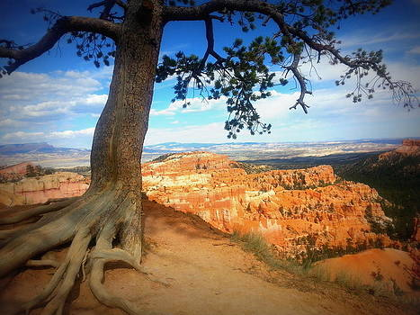 Rim of Bryce Canyon by Carrie Putz