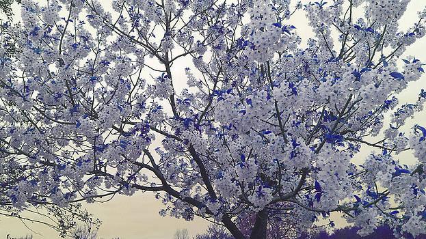 Spring Flourish by Davina Nicholas