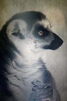 Ring Tailed Lemur by Melanie Lankford Photography