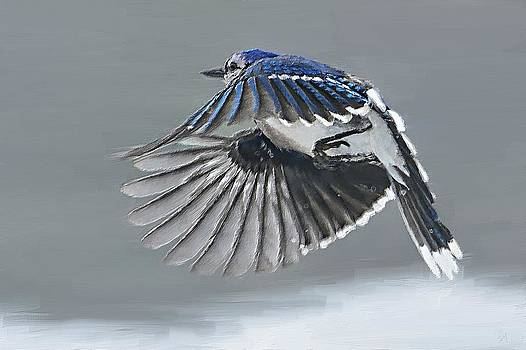 Ringed Wings by Sandy Mallet
