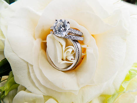 Rings in a Rose by Nicole Greer