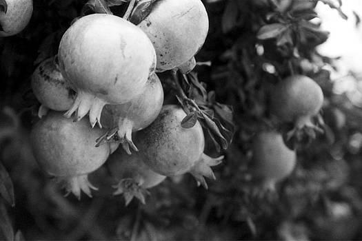 Ripe Pomegranates by Magdalena Mirowicz